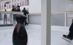 Penguins at Somerset House (2011) web (0-00-02-19)
