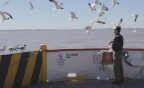 Feeding Seagulls off Galveston Island